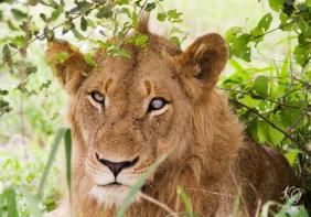 0055Kareno-wildlife-photography